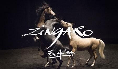 TADS-Zingaro - Paris Bazaar