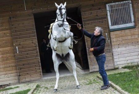 Mario Luraschi le Cavalier Éclectique-Ouv-ParisBazaar-Marion